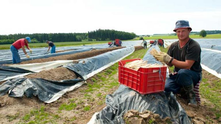 Diskussion um den Mindestlohn f�r Saisonarbeitskr�fteim Bereich Obst und Gem�se.