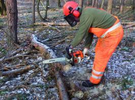 Kronenholz wird zu Kamin- und Brennholz aufgearbeitet. Foto: Münchhoff