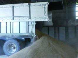 Abschieben des Getreides ist die Lösung in den niedrigen Hallen des Pahrener Betriebes. Foto: Möbius