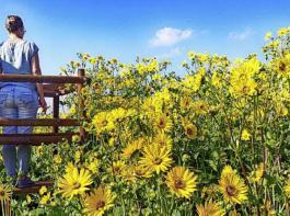 Landwirt Thomas Metzler hat auf seinen Donau-Silphie-Feldern bei Hahnennest Hochsitze aufgestellt. Er lädt dazu ein, sich von dort ein Bild von der Blütenpracht und der großen Vielfalt bestäubender Insekten zu machen.