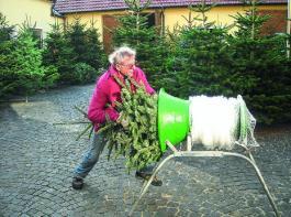 Ins Netz geschoben und ab geht der Baum in die gute Stube.