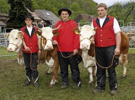 Den Gesamtsieg bei den   Züchtersammlungen errang   Hubert Schätzle aus Todtnau-Präg. Die Qualität der drei Kühe, die zusammen 26 Kalbungen aufwiesen, war nicht zu toppen.
