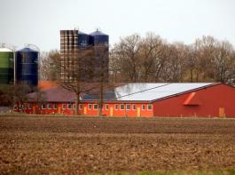 In NRW müssen in großen Schweinehaltungen ab sofort Abluftreinigungsanlagen eingebaut werden.© landpixel.de