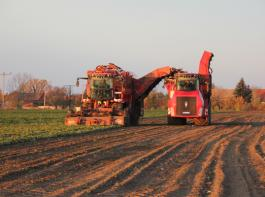 Effizienz Mit einem Terra Variant mit Rübenaufbau werden die Rüben vom fahrenden Roder übernommen und zur Miete oder zum Lkw transportiert.