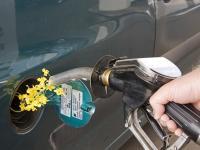 BiokraftstoffeGerkenErnstFotolia.jpg