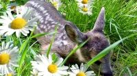 Durch Kooperationen von Jägern und Bauern kann Jungwild gerettet werden.