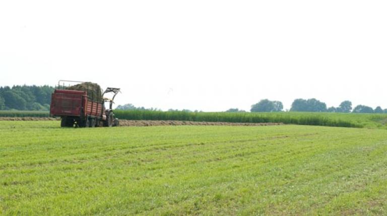 Greening muss einfach und flexibel sein: Bauern brauchen Wahlm�glichkeiten!