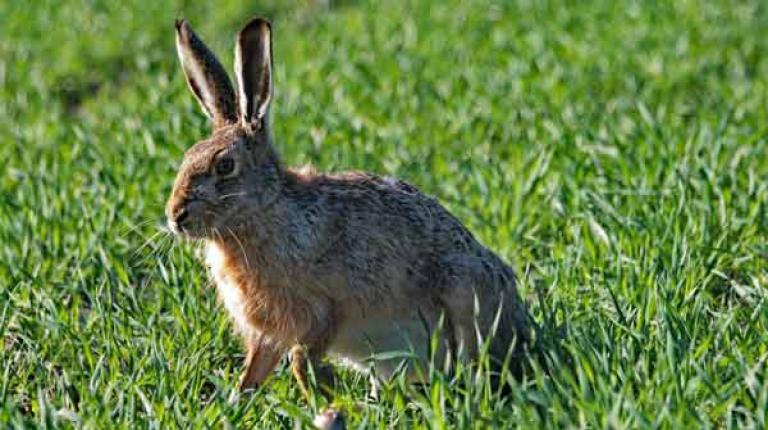 Aktion zum wildtiergerechten Zwischenfruchtanbau geht ins dritte Jahr.
