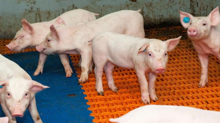 Die Preissituation ist f�r viele Landwirte in Bayern bedrohlich.