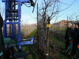 Der manuelle Baumschnitt kostet Zeit und ist teuer, der Maschinenschnitt kann dem entgegenwirken – im Bild R�ckf�hrungsschnitt bei Boskoop hinter die Schnittlinien des Vorjahres.