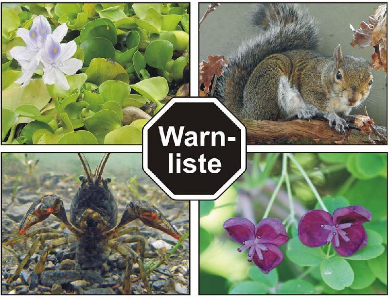 bfn warnliste informiert ber invasive tiere und pflanzen baum und natur fachthemen. Black Bedroom Furniture Sets. Home Design Ideas