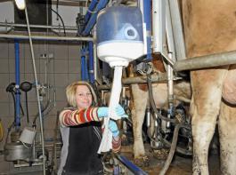 Melken macht 2017 wieder mehr Spaß.