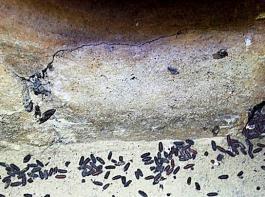 Schadhafte Stellen  im Stall sollten ausgebessert werden, hier können sich leicht  neue Populationen an Fliegen aufbauen.