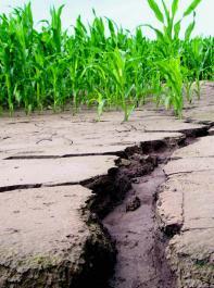 Solche Bodenerosion darf nicht sein – vorbeugender Gewässerschutz ist hier dringend gefragt.