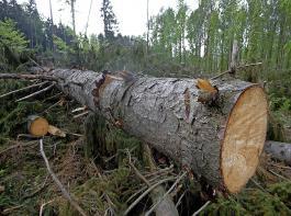Unzumutbare Erschwernisse für die Waldbewirtschaftung:  Der BLHV kritisiert  geplante Verschärfungen und zusätzliche Auflagen bei den Grundpflichten des Waldbesitzers.