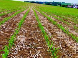Ausreichende Bodenabdeckung ist bei Mulchsaat entscheidend.