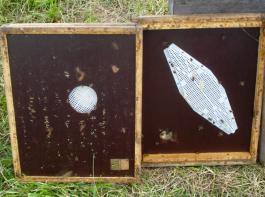 Ober- und Unterseite einer Bienenflucht: Durch die runde  Öffnung verlassen die Bienen den Honigraum und  finden danach auf der Unterseite keinen Weg mehr zurück.