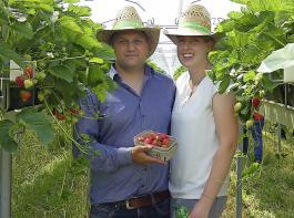 Alexander und Michaela Apfelböck, Obstbauern aus Landau an der Isar, haben Erdbeeren  auf Stellagen in einer ergonomisch sinnvollen Höhe.
