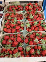 Bei  Erdbeeren vermarktete  der EGRO eine Rekordmenge  von 3330 Tonnen.