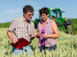 Die Anbaufläche für Weizen ist sowohl auf Landes- als auch auf Bundesebene kleiner als im vergangenen Jahr.