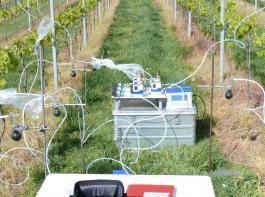 So sieht die Duftstoffsammlung an Weinreben für Verhaltensexperimente mit Traubenwicklern in der Versuchspraxis aus.