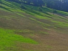 Solche großflächigen  Grünlandschäden werden im  Schwarzwald werden immer öfter entdeckt. Vor allem die Vorbergzone ist vom Engerlingbefall betroffen.