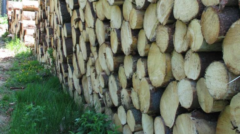 Beim Holz herrscht heuer eine sehr differenzierte Marktsituation.