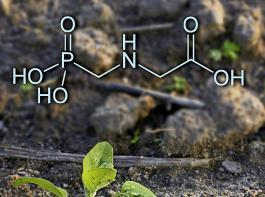 Das Gerangel um den Wirkstoff  Glyphosat hat auf europäischer Ebene ein vorläufiges Ende gefunden.