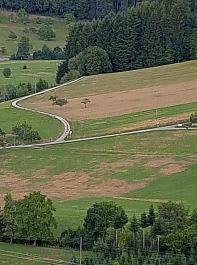 Typisch für Engerlingschäden sind platz- und streifenweise auftretende Graustellen im Grünland. Das Foto entstand in Haslach im Kinzigtal.