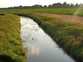 Entlang von Gewässern gelten besondere Abstandsauflagen für Düngung und Pflanzenschutz.