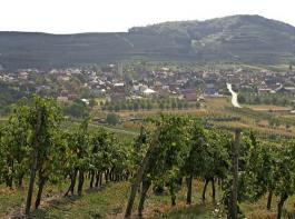 Bei der Besetzung der Schutzgemeinschaft soll  die Struktur der Weinwirtschaft in Baden angemessen  berücksichtigt werden.