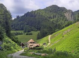 Vom Stampfbachtal aus ist der  Scharfenstein gut zu sehen.