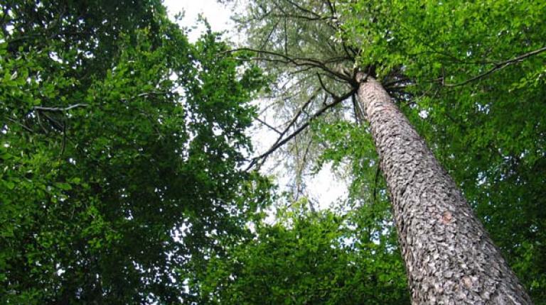 Bayerns Bäume liefern saubere Luft, frisches Trinkwasser, sind Naturschützer, erzeugen einen nachhaltigen Rohstoff und bieten auch noch Arbeitsplätze.