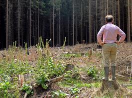Private Waldeigentümer müssen sich mit strukturellen Nachteilen bei der Beseitigung von Waldschäden herumplagen.