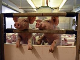 Für die Stabilisierung der Tiergesundheit ist auch ein ausreichender Rohfasergehalt im Futter wichtig.