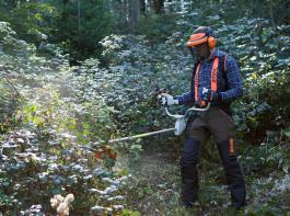 Das Beseitigen von Brombeergestrüpp und anderem Unkraut gehört zu den klassischen Aufgaben für den Einsatz von Freischneidern im Wald.