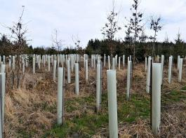 """Bundeslandwirtschaftsministerin  Julia Klöckner sieht im Anpflanzen von Bäumen das """"effektivste Mittel"""" gegen den Klimawandel."""