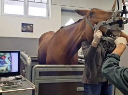 Dr. Jörg-Peter Belz nutzt Laser bei seinen Zahnbehandlungen. Durch den Einsatz von Endoskopen können die Tierärzte heute schon viel mehr Probleme im Pferdemaul behandeln.