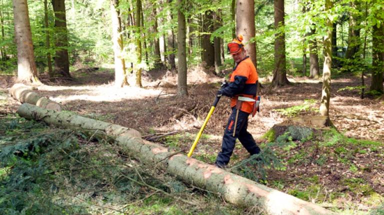 Nachhaltige Forstwirtschaft dient dem Naturschutz und dem Klimaschutz gleichermaßen.