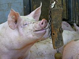 """Einig sind sich die Agrarminister der Länder, die Empfehlungen der Borchert-Kommission für einen Umbau der Tierhaltung """"zeitnah"""" umzusetzen. Diskussionsbedarf besteht aber offenbar noch bei der Finanzierung."""