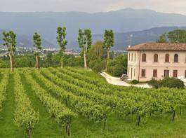 Das Appellationsgebiet für Prosecco umfasst fast 25.000 Hektar Reben in Höhenlagen zwischen zwei und 50 Metern. Sie werden von rund 11.500 Winzern bewirtschaftet, von den kleinsten häufig im Nebenerwerb. Die Hauptrebsorte für Prosecco ist Glera.