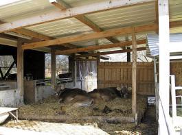 Die Abkalbebucht lieber unter dem Vordach oder in einem einfachen Anbau platzieren als in einer dunklen, schlecht durchlüfteten Stallecke.