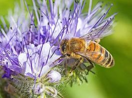 Der  BLHV bewertet den berufsständischen Einsatz vor dem Beschluss  zum Insektenschutzpaket im Bundeskabinett positiv.