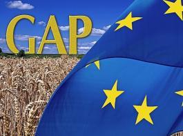 Um die Dringlichkeit der Anliegen bei der Umsetzung der GAP zu unterstreichen, haben sich DBV und  Landesbauernverbände gemeinsam an Julia Klöckner gewandt.