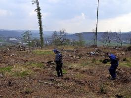 Für das Aufforsten verlorengegangener Waldflächen wird noch viel Geld und Arbeit erforderlich sein.