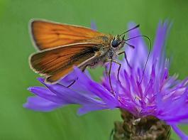 Das Insektenschutzpaket wandert jetzt zur Weiterbearbeitung in den Bundestag und den Bundesrat.