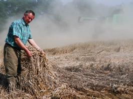 Wenn das Getreide umfällt, hat der Landwirt ein großes Problem.