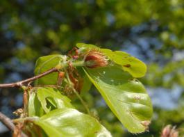 Am 10.Dezember hat Forstminister Alexander Bonde den jährlichen Waldzustandsbericht des Landes vorgestellt. Gegenüber 2014 hat sich der Zustand von Buchen, Fichten und Tannen geringfügig verbessert.