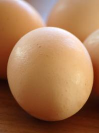 Bei der neuen Untersuchungsmethode bleibt das Ei heil.