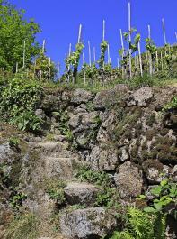 Auch Granit ist für den Bau einer Trockenmauer, wie hier in Bühlertal/Ortenau, geeignet.